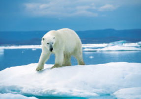 ours_blanc2
