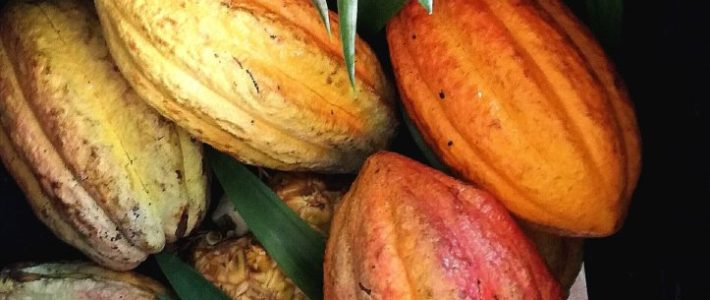 Preserving The Rainforest Through Integrated Agriculture